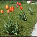Flowers To Plant In Spring Summer Time