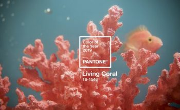 Living Coral - Meet Pantone's 2019 Colour of the Year